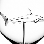 shark in glass closeup